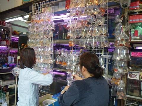 HK-suiso-20120912001